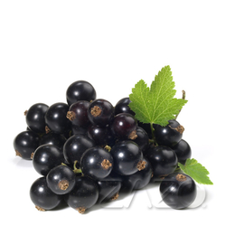 Black Currant (Zazo Liquid)