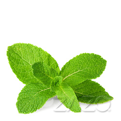 Mint (Zazo Liquid)