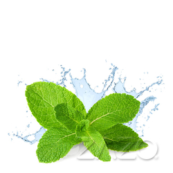 Fresh Mint (Zazo Liquid) - 4mg - 10ml